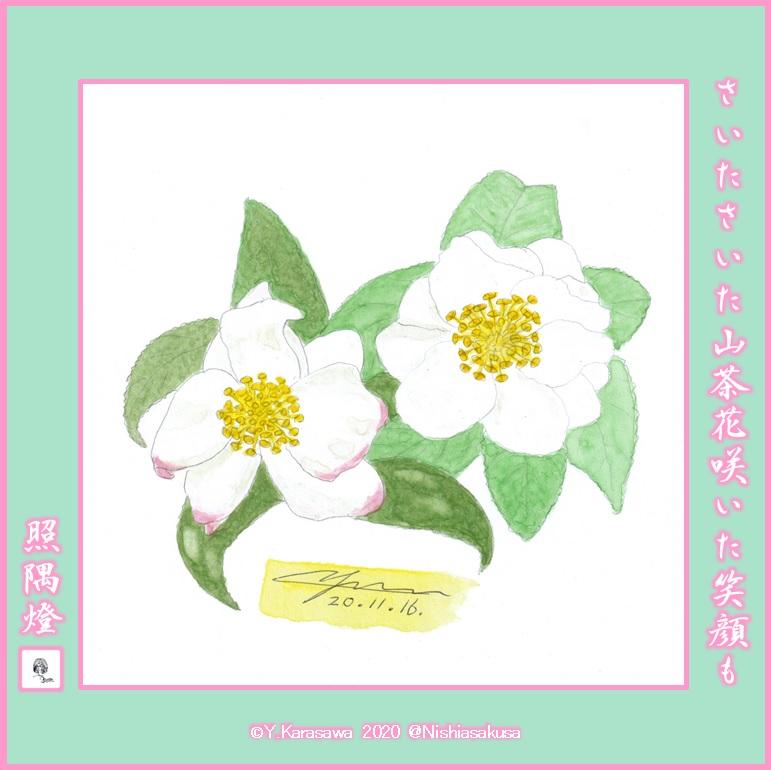 201116山茶花白LRG