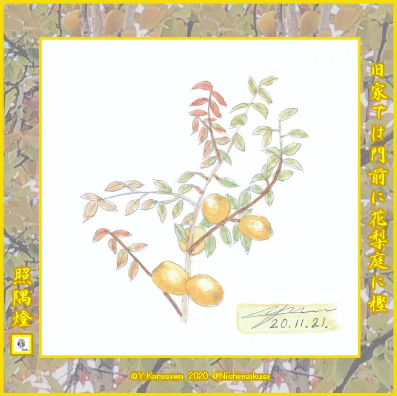 201121花梨の実LRG