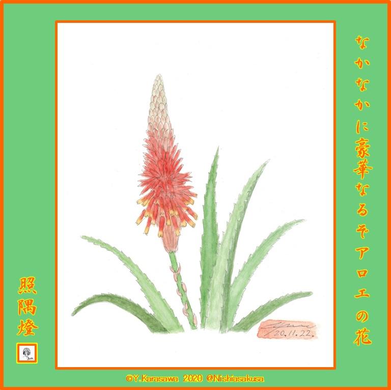 201122アロエの花