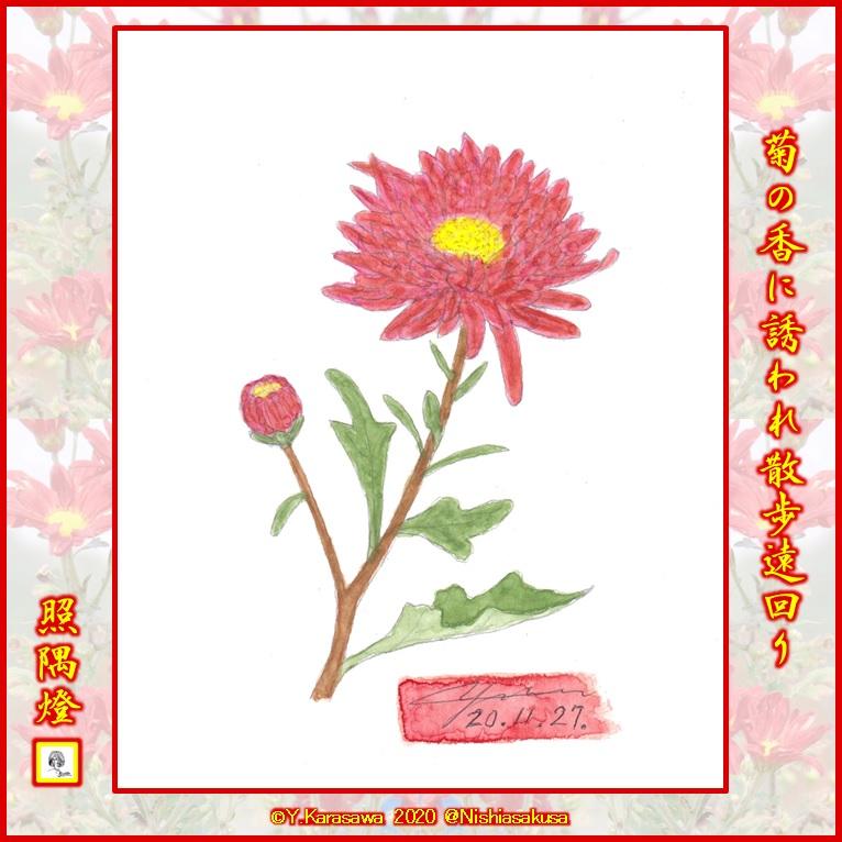 201127中菊臙脂色LRG
