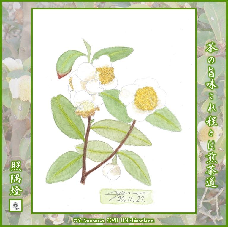 201129お茶の花LRG