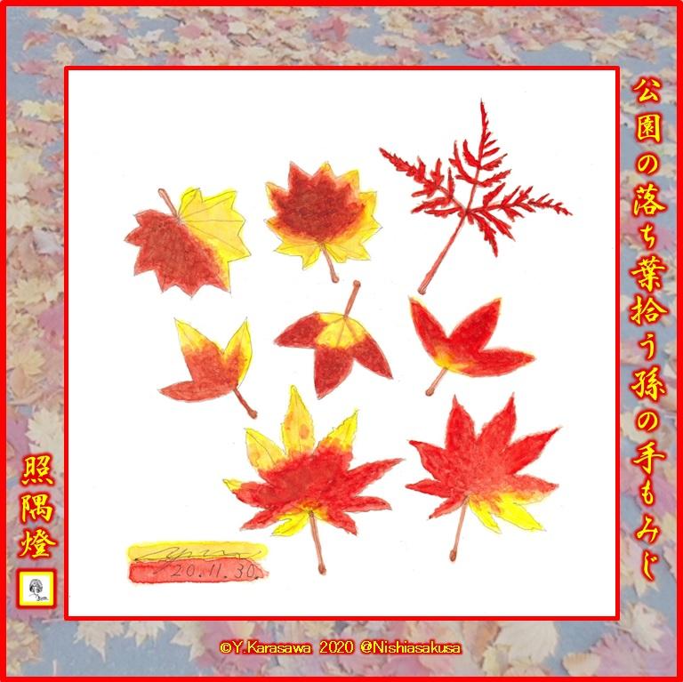 201130各種楓の落ち葉LRG