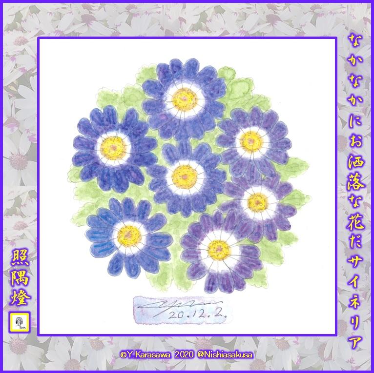 201202サイネリア青紫LRG