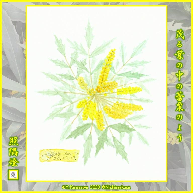 201210細葉柊南天の花LRG