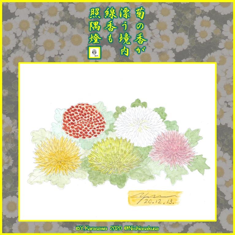 201213菊の花各種LRG