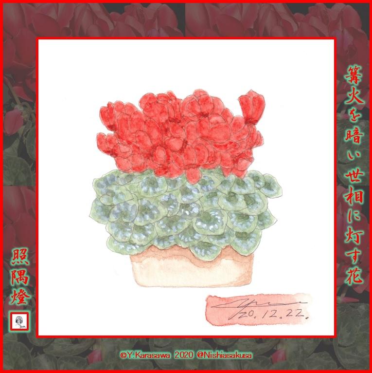 201222赤いシクラメンLRG