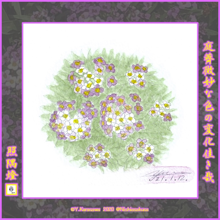 210112庭薺紫LRG