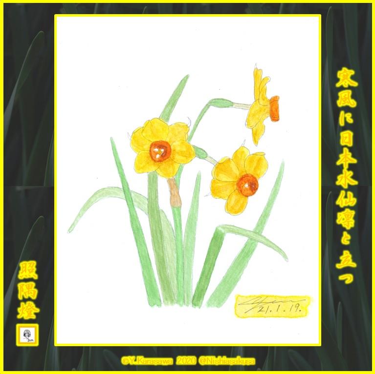 210119黄色い日本水仙LRG