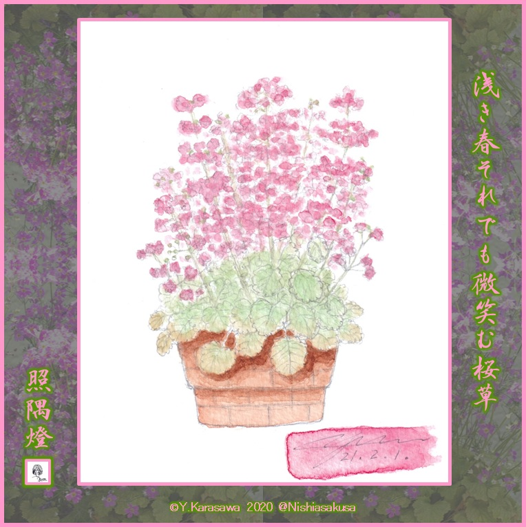210201桜草LRG