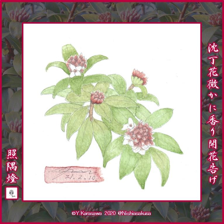 210210沈丁花開花LRG