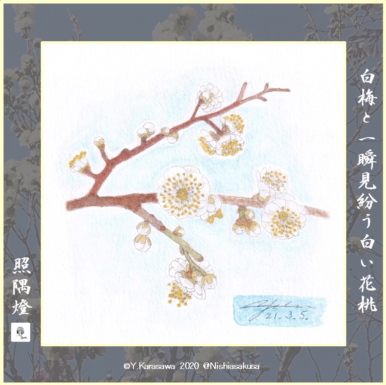 210305白い花桃LRG