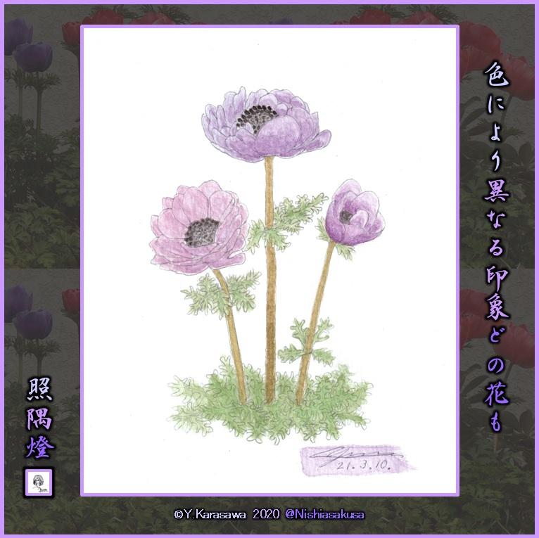 210310アネモネ紫LRG