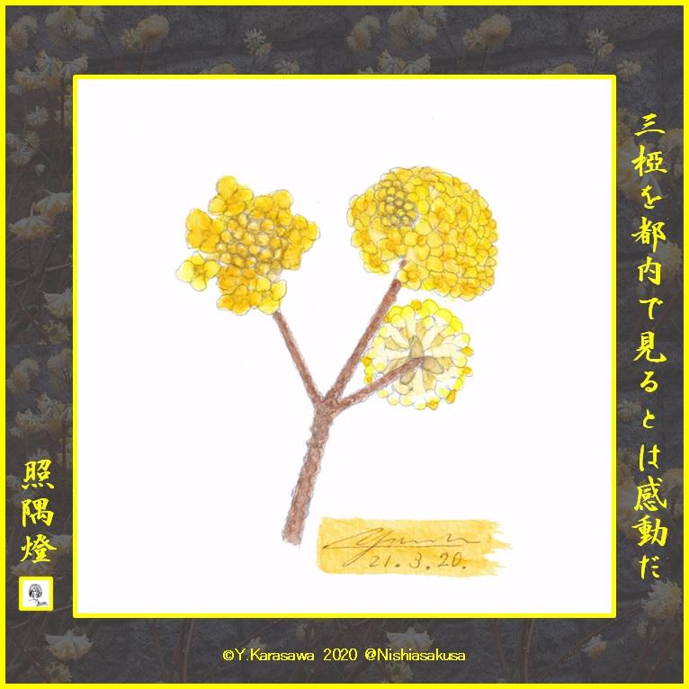 210320三椏黄色LRG