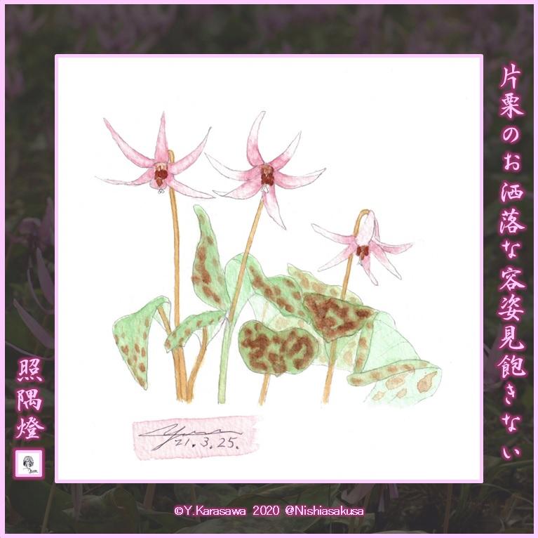 210325片栗の花LRG