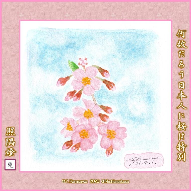 210401桜LRG