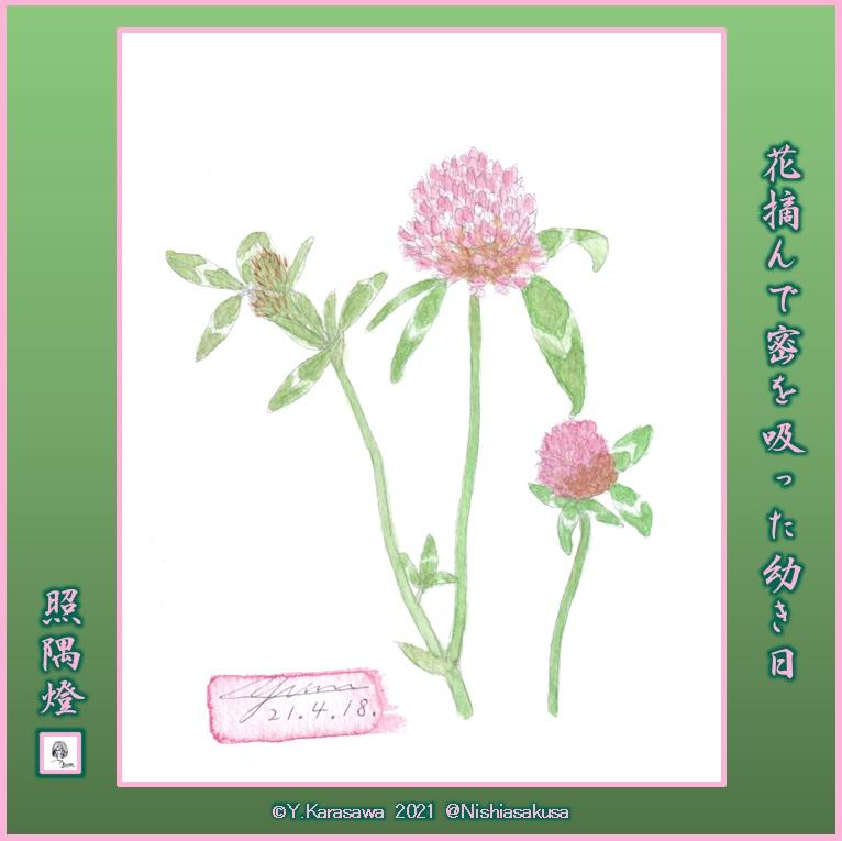 210418赤詰草LRG