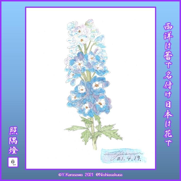 210419デルフィニウム青と紫の斑LRG