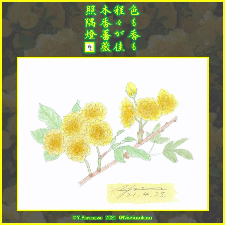 210425木香薔薇LRG