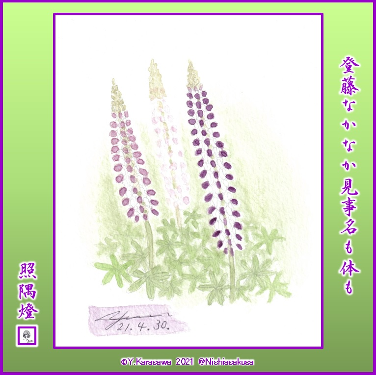 210430ルピナス紫LRG