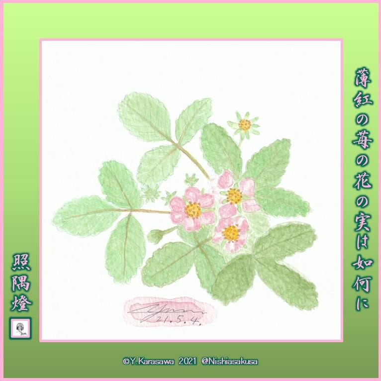 210504苺の花ピンクLRG
