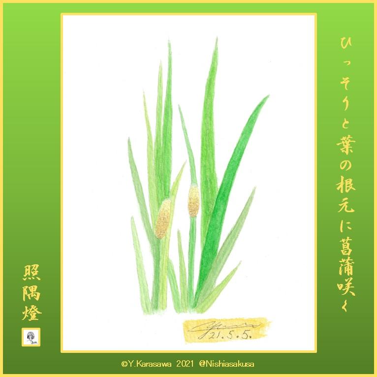 210505菖蒲の花LRG
