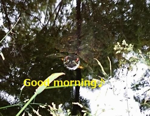 Fotor_158923625138313.jpg