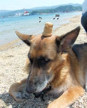 犬の頭に乗る小地蔵さん