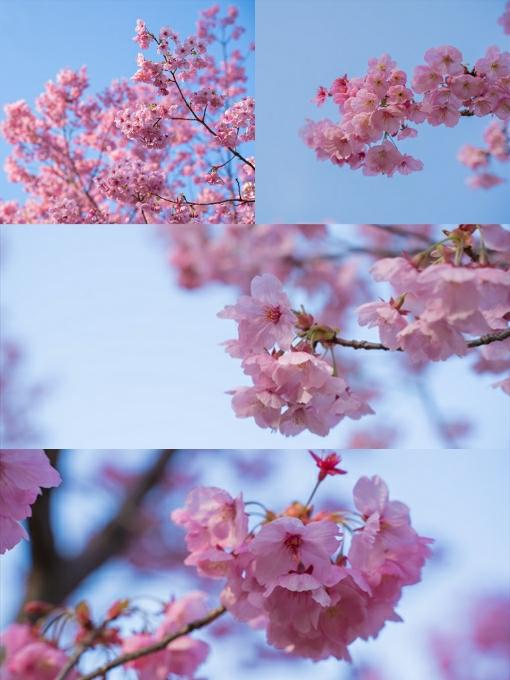 Collage_Fotor01.jpg