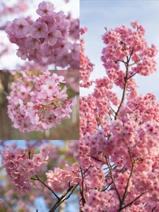 Collage_Fotor02.jpg