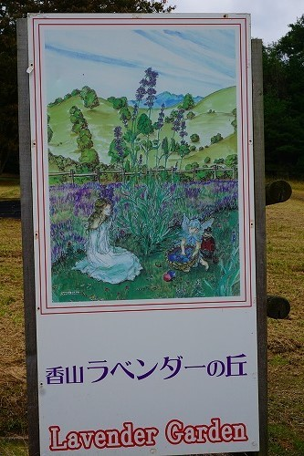 kosumosu (4)