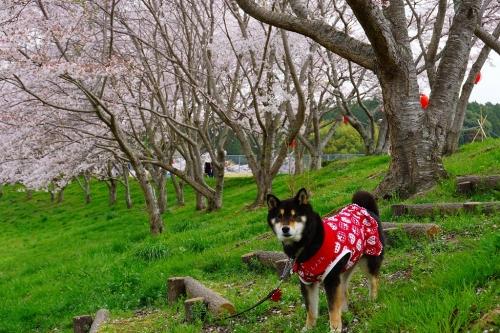 hakuryuko (11)