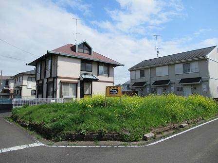 松栄85-2