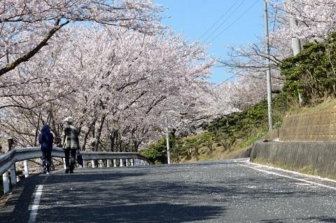 桜6779