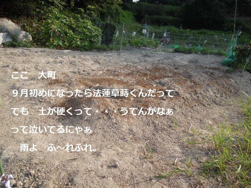 大町法蓮草予定地094 - コピー