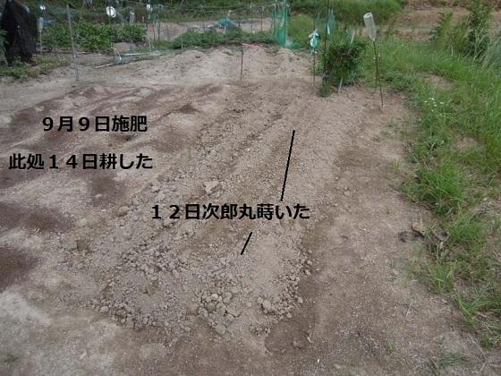 大町法蓮草栽培地