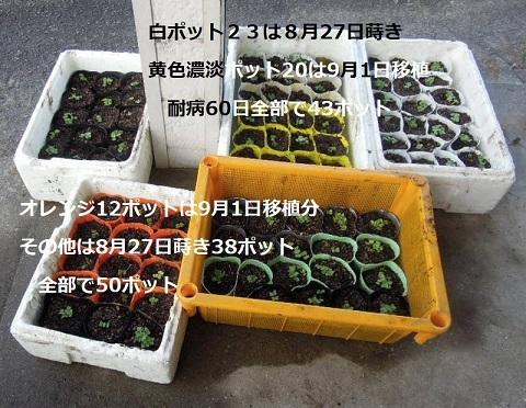 郷愁80日&耐病60日 9月1日撮影