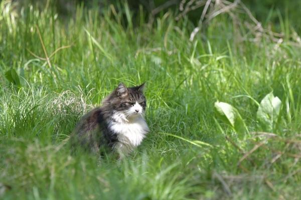 公園猫20210409