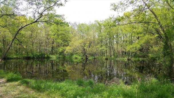 新緑のピクニックの森20200417