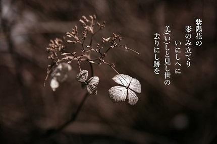 紫陽花の影6 - コピー