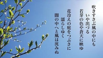 花冷え6 - コピー
