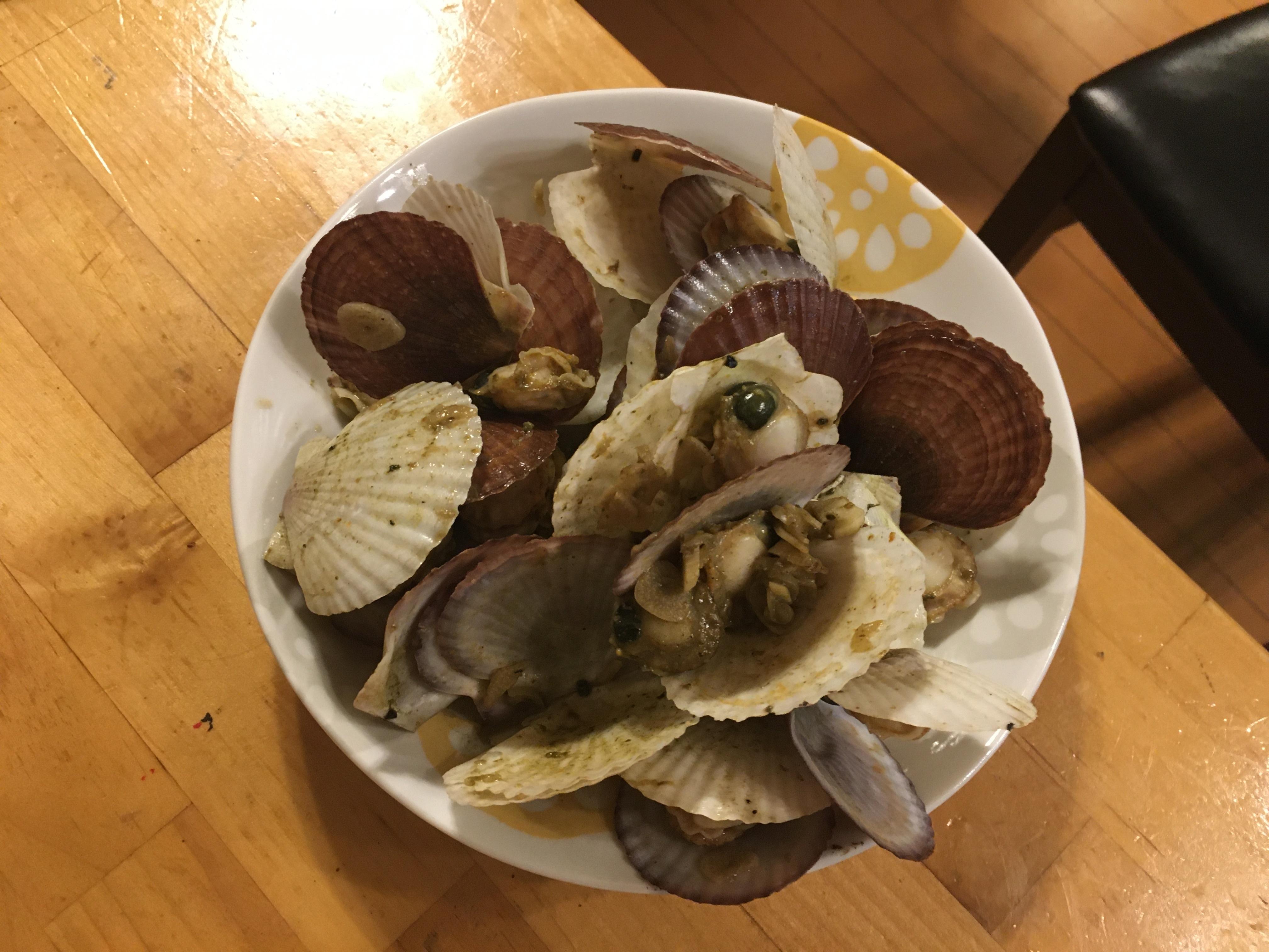 ホタテ稚貝