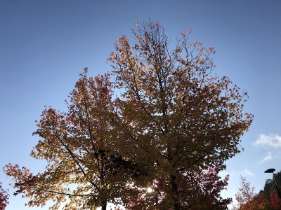 201110-02.jpg