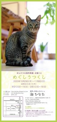 ☆「めぐしうつくし -点猫16-」のご案内☆