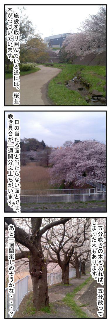 六方調整池多目的施設の水路と桜 千葉市若葉区_002