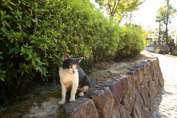 kyoto19.jpg