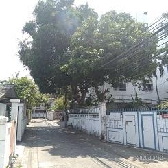 P_20200312_132228,mANGO TREE
