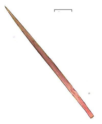 シロオビドクガ中齢幼虫の毒針毛の針