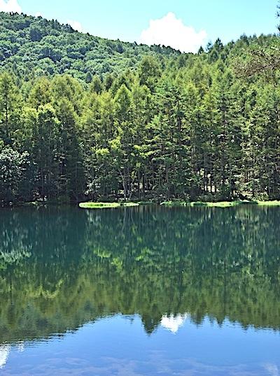 湖面に映る針葉樹林