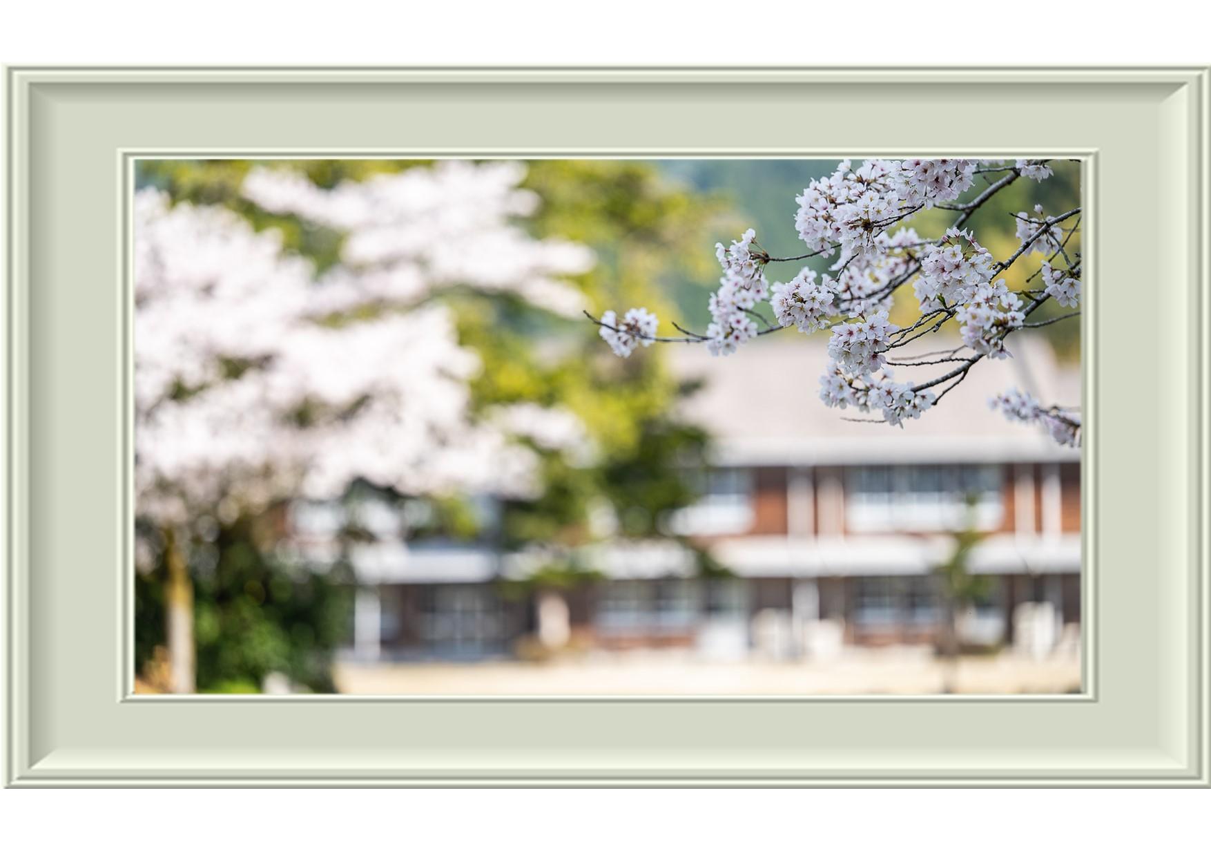20210325の秋月城址の桜額縁02