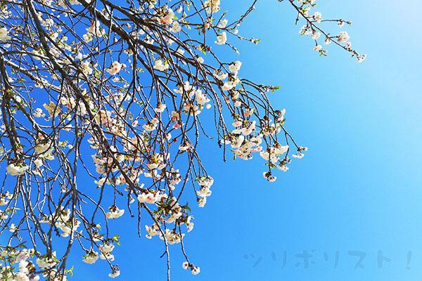 川島釣り堀_001